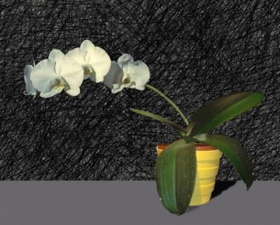 Phalenopsis by Joe Ruffo