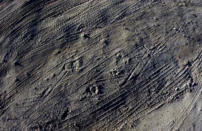 Tracks by David Lovekin