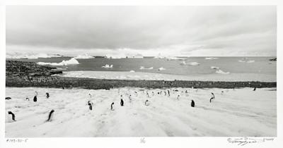 #147-70-5 Gentro Penguins, Antarctica by Larry Ferguson