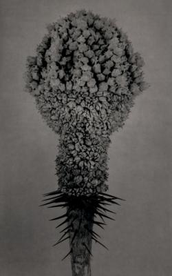 A Silent Mutation/Plants by Roberto Kusterle