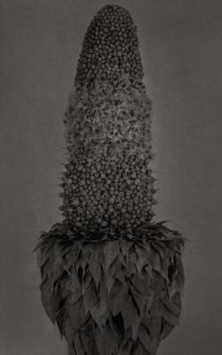 A Silent Mutation 1A/ Plant by Roberto Kusterle