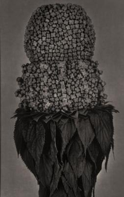 A Silent Mutation 4A/ Plant by Roberto Kusterle
