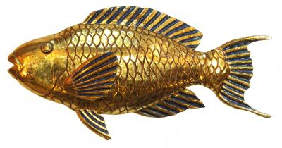 Golden Parrotfish by Troy Muller
