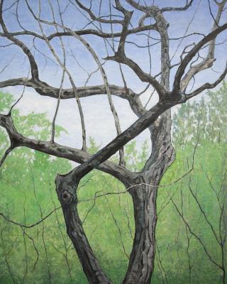 Lauritzen Garden Tree by James Freeman